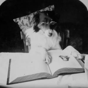 3D Stereoscopic Photographs of Dogs and Cats in the Victorian Era (1800's)